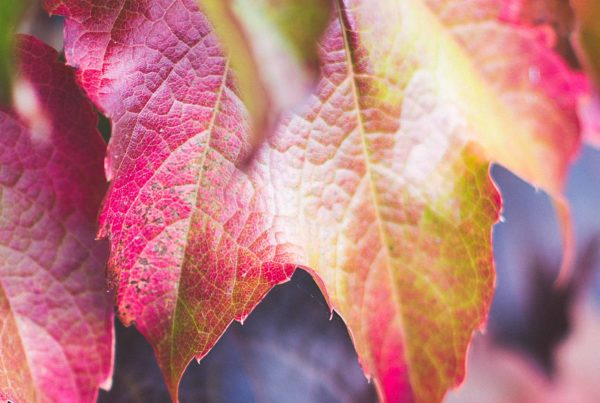 Image of autumn leaves. Autumn is a signature season of Orange.