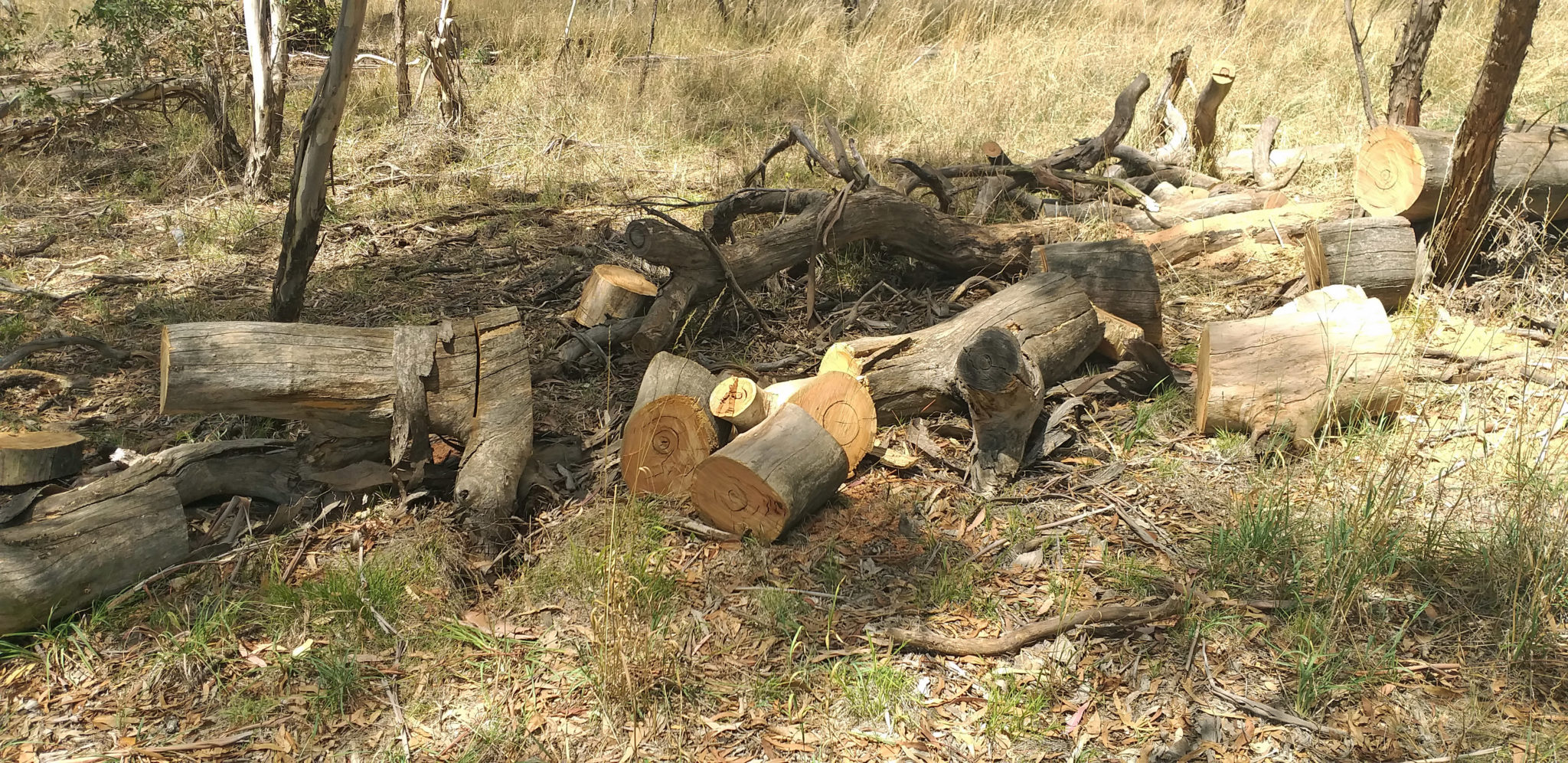 Evidence of illegal firewood collection at Bloomfield Park