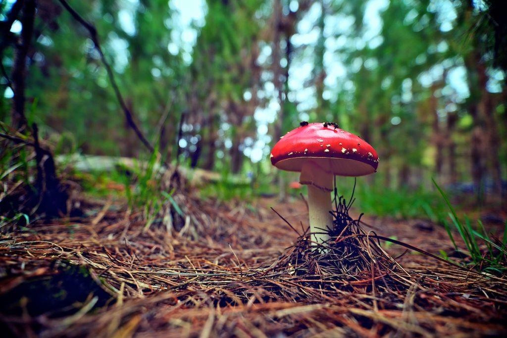 Kinross Forest