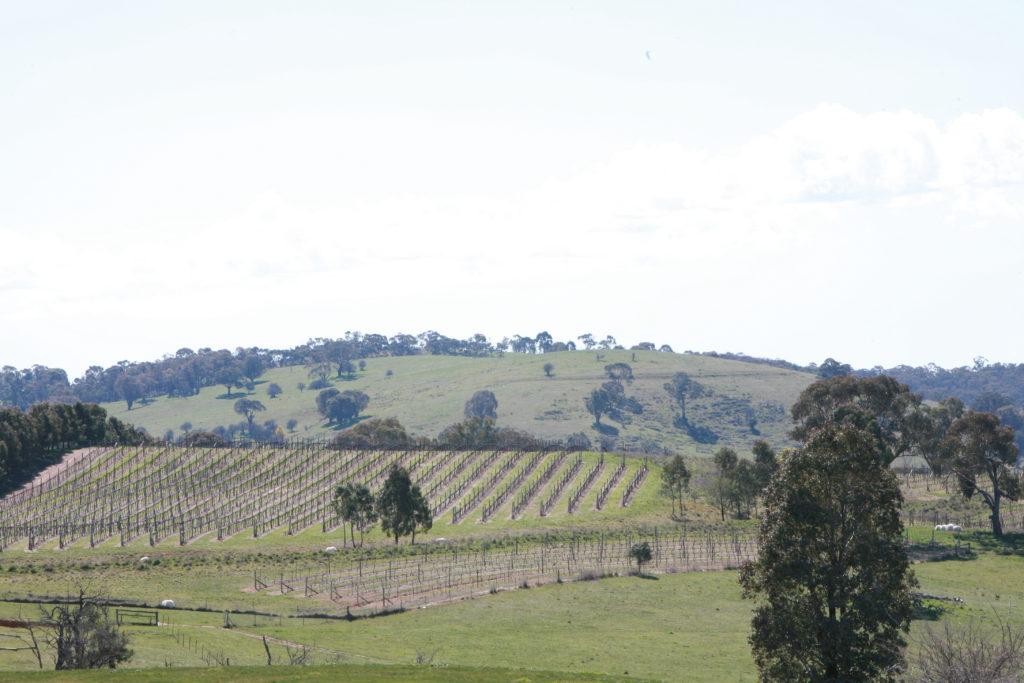 Philip Shaw vineyard