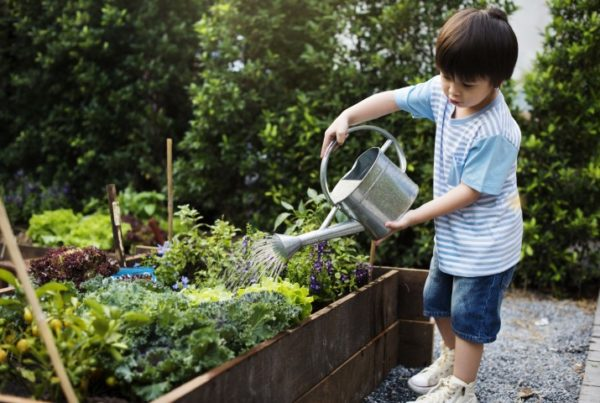 Image of child watering vegetable garden with watering can
