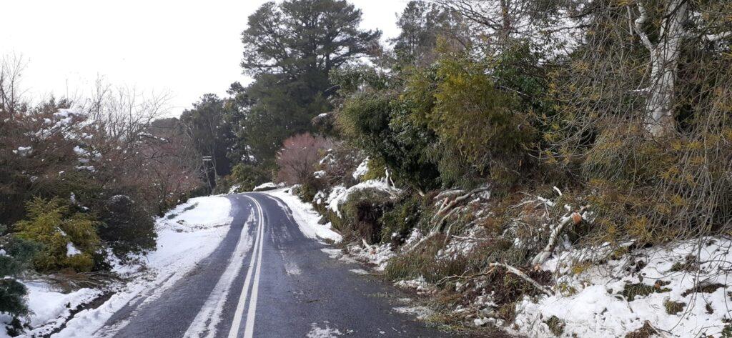 Trees down on Pinnacle Road